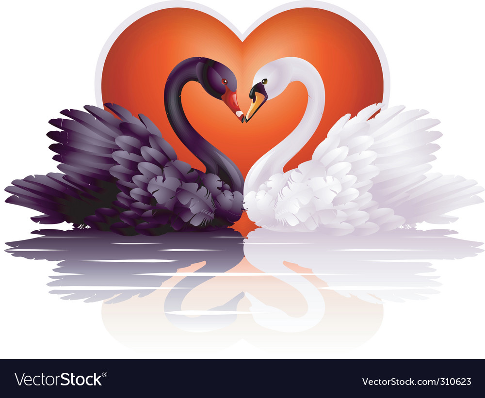 Graceful swans vector | Price: 3 Credit (USD $3)