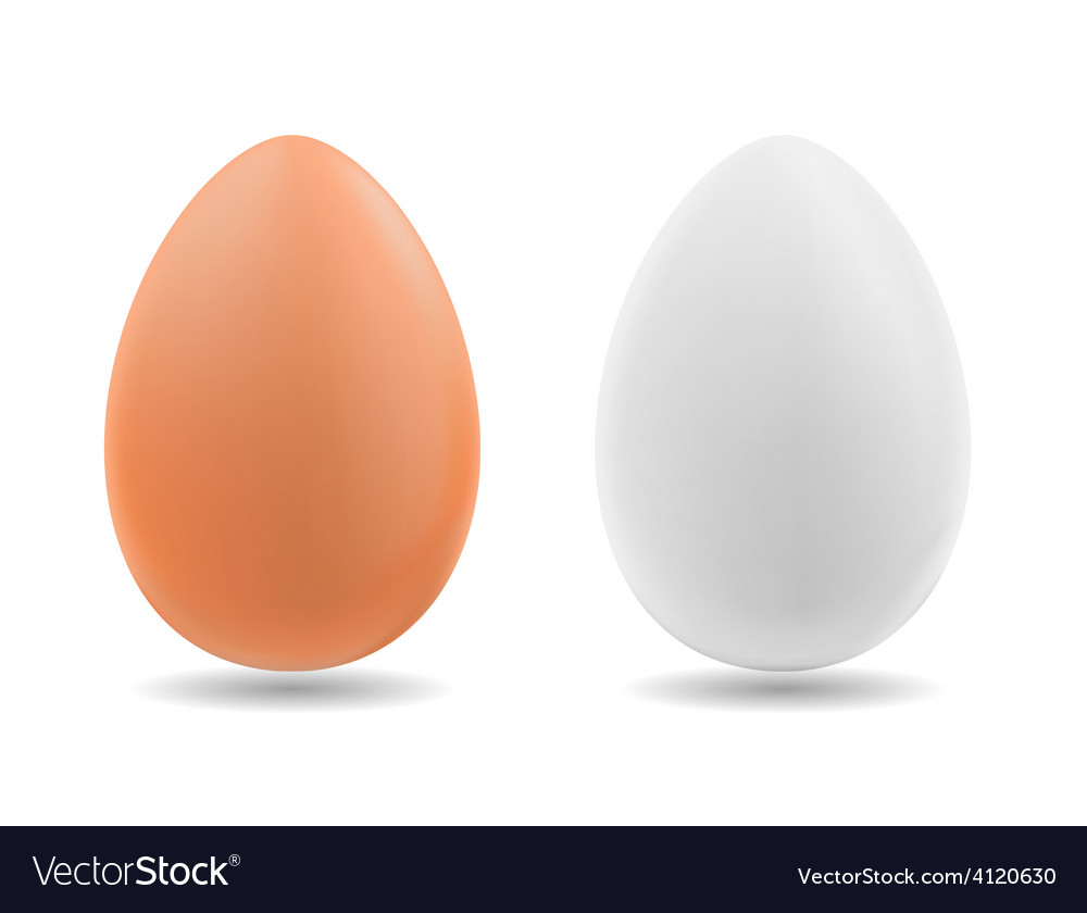 Brown and white eggs on background vector | Price: 1 Credit (USD $1)