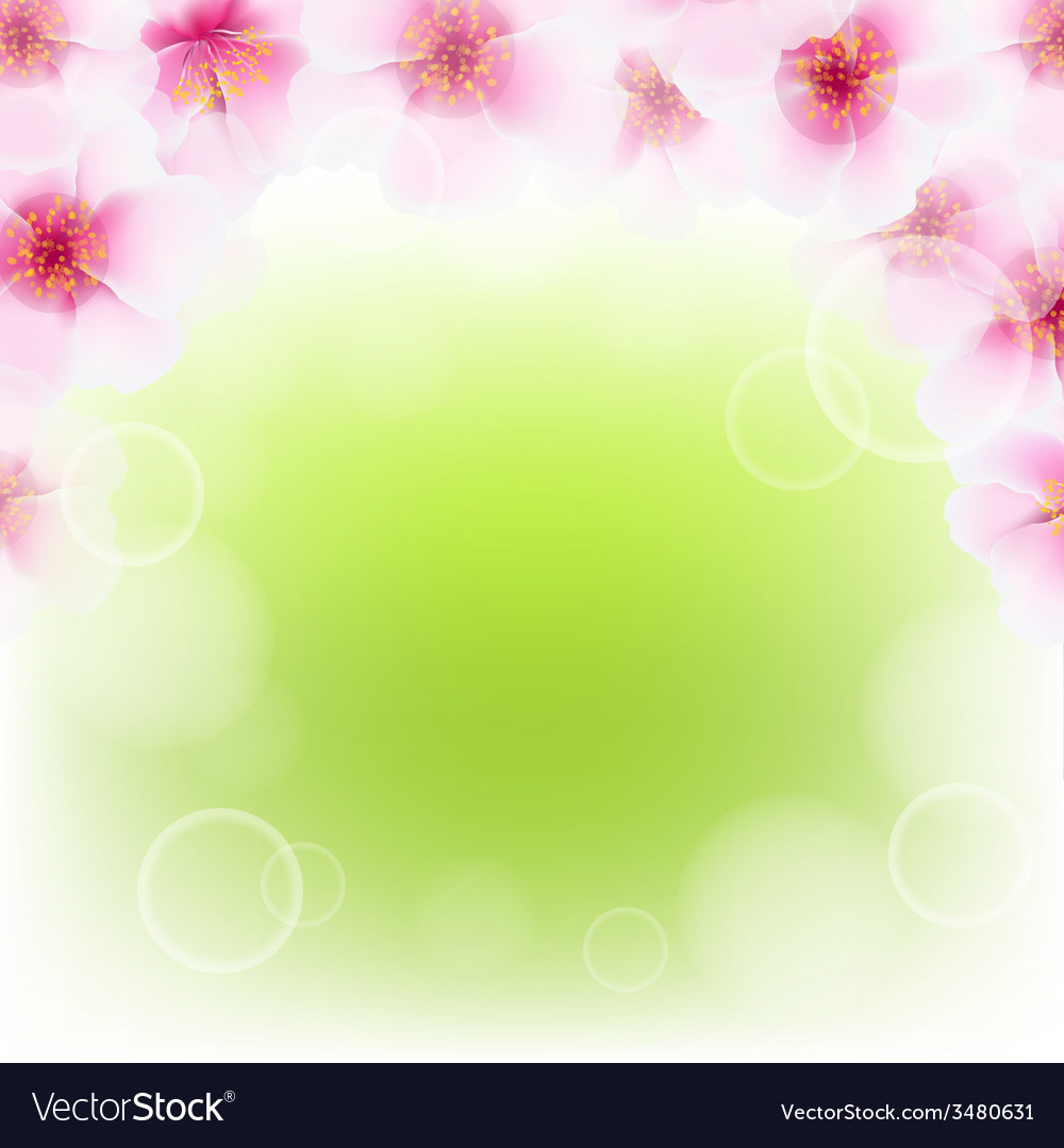 Pink cherry flower border with blur vector | Price: 1 Credit (USD $1)