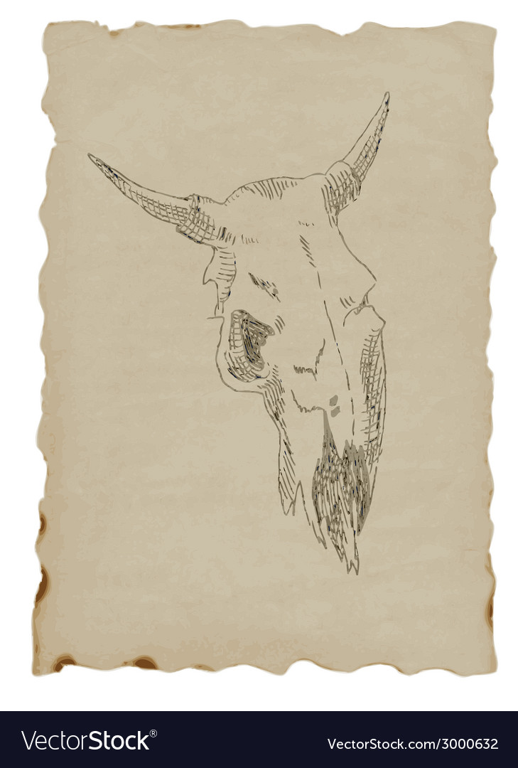 Cow skull vector   Price: 1 Credit (USD $1)