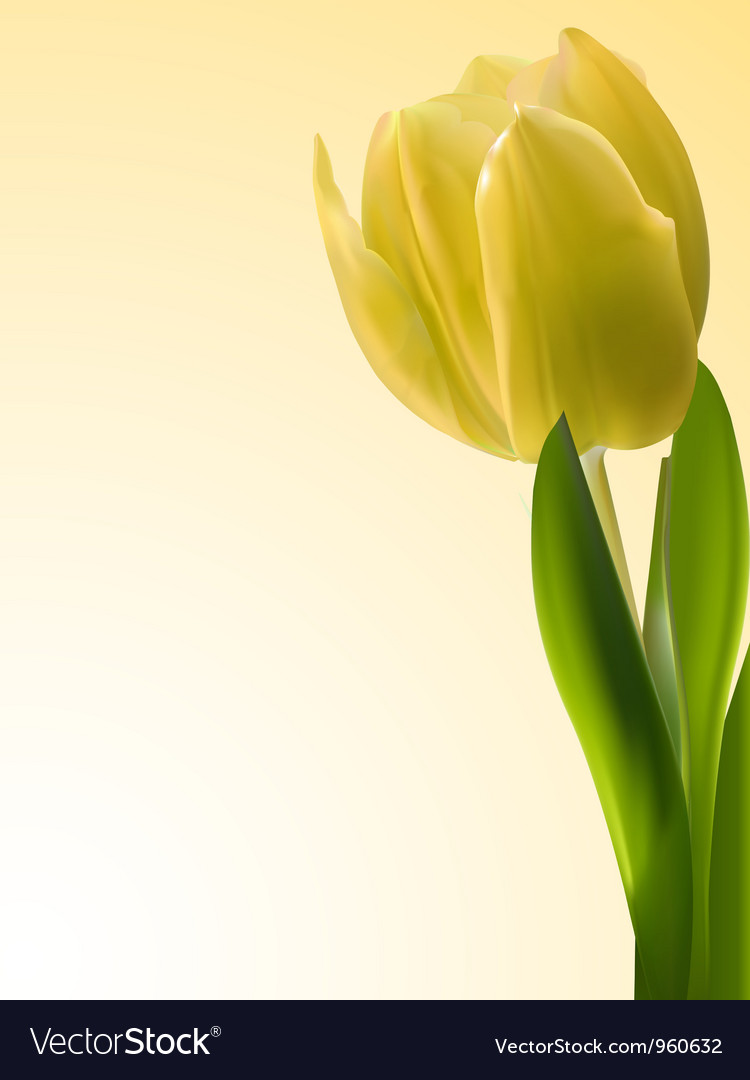 Yellow tulip vector | Price: 1 Credit (USD $1)
