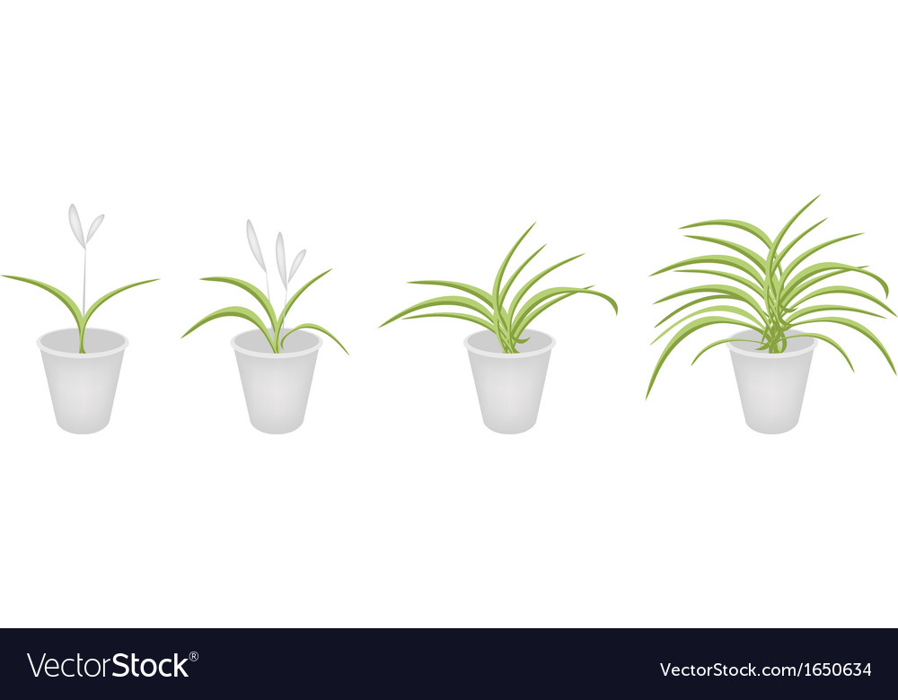 A set of dracaena plant in flower pots vector | Price: 1 Credit (USD $1)