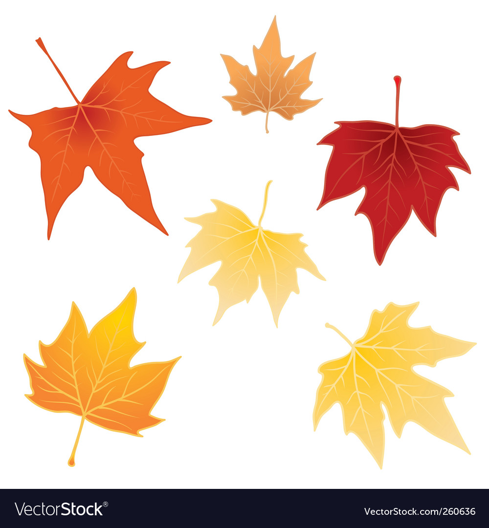 Separate autumn leaves vector | Price: 1 Credit (USD $1)