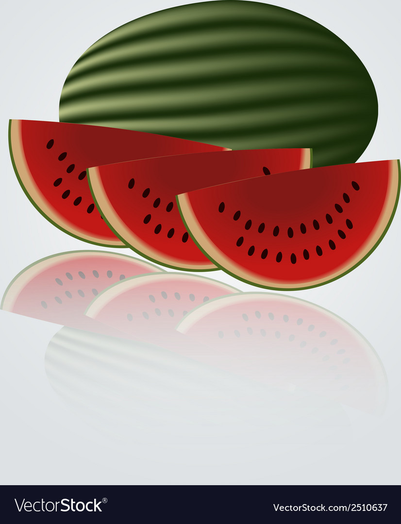 Colorful melon eps10 vector | Price: 1 Credit (USD $1)