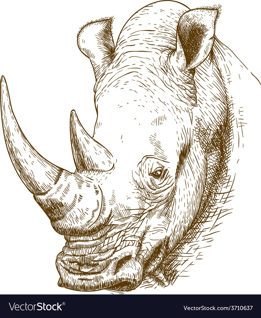 Engraving rhino vector | Price: 1 Credit (USD $1)