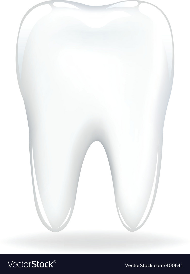 Tooth vector | Price: 1 Credit (USD $1)