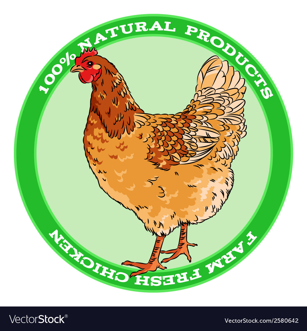 Brown broody chicken vector | Price: 1 Credit (USD $1)