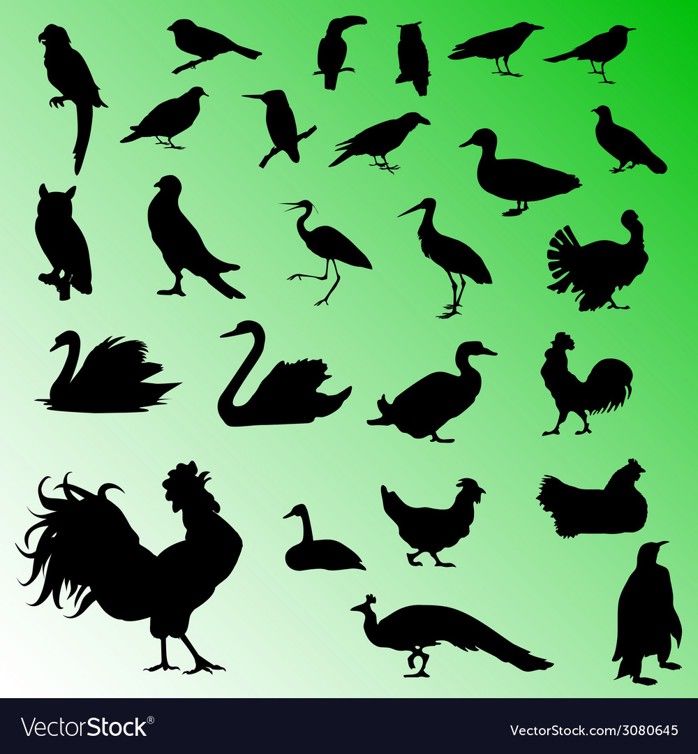 Birds silhouettes vector | Price: 1 Credit (USD $1)