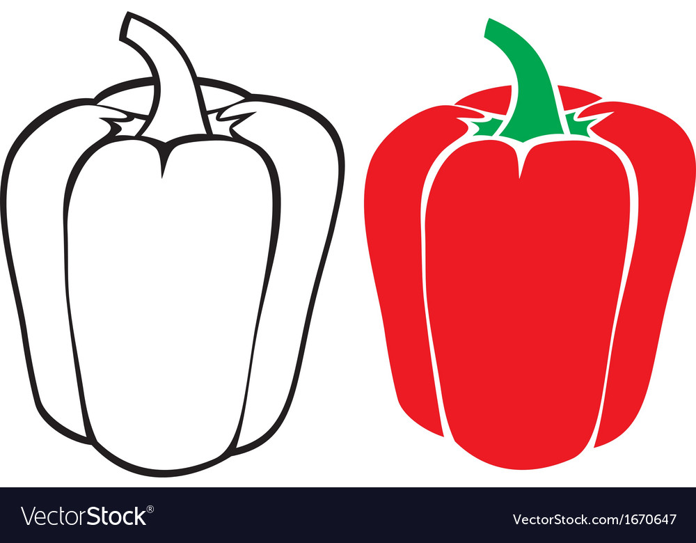 Sweet red bell pepper vector   Price: 1 Credit (USD $1)