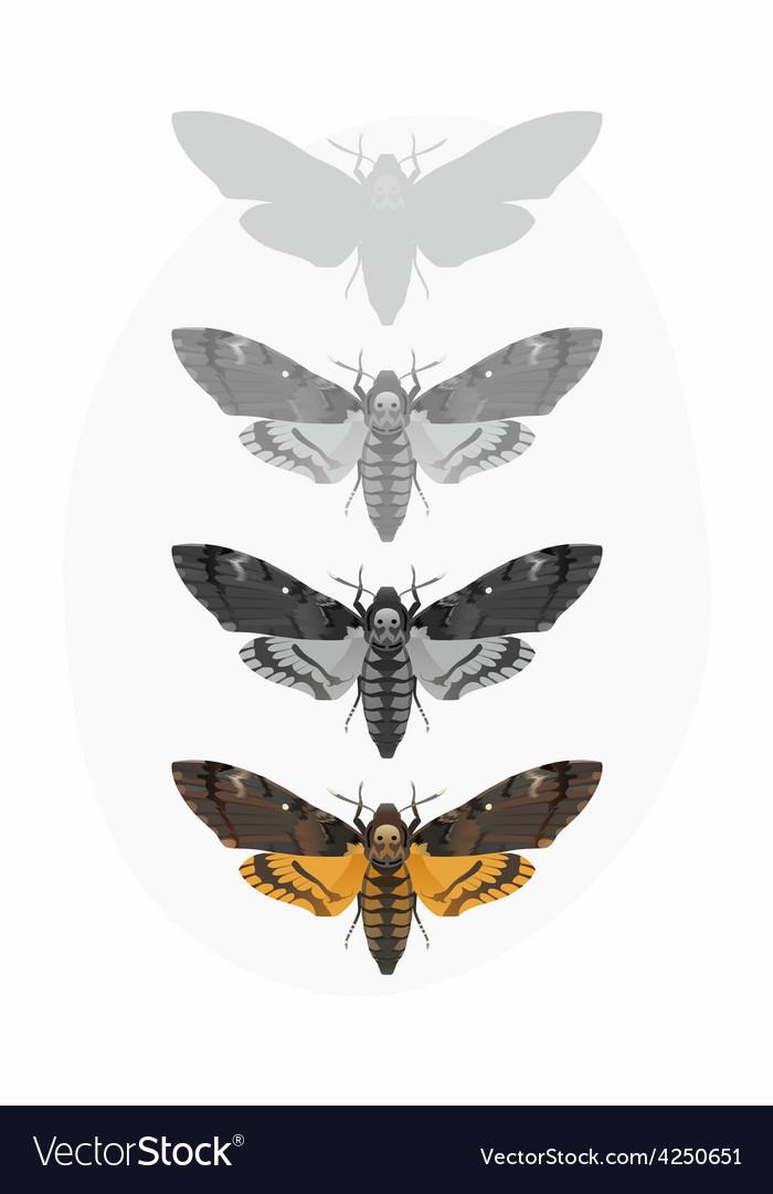 Butterfly deaths head hawk moth set vector
