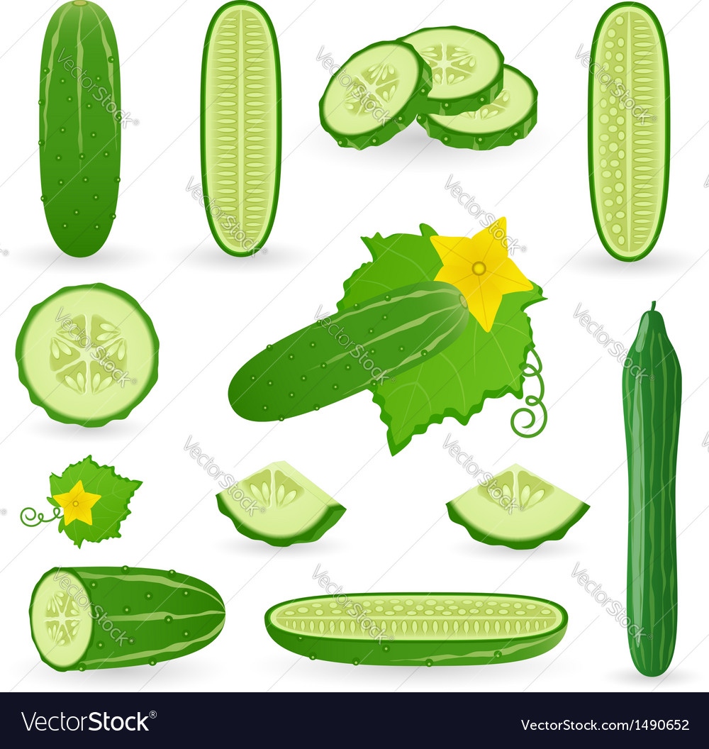 Icon set cucumber vector | Price: 1 Credit (USD $1)