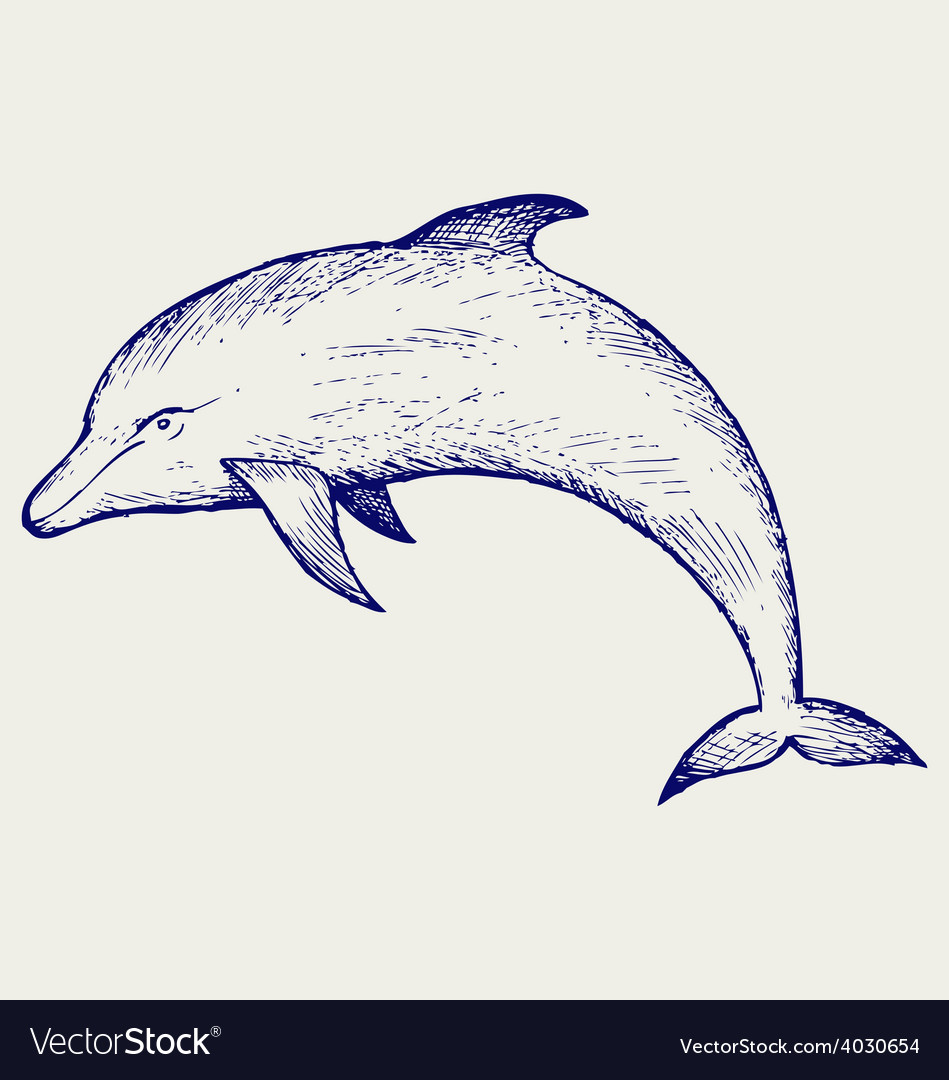 Beautiful dolphin jumping in the water vector | Price: 1 Credit (USD $1)