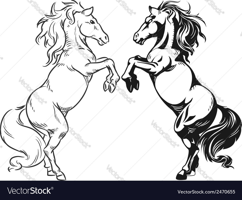 Sketch of rearing stallion or horse vector | Price: 1 Credit (USD $1)