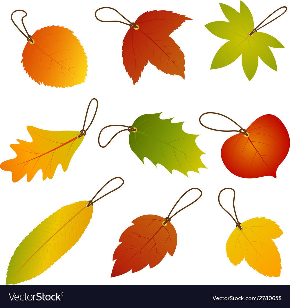 Autumn leaves hang tags vector | Price: 1 Credit (USD $1)