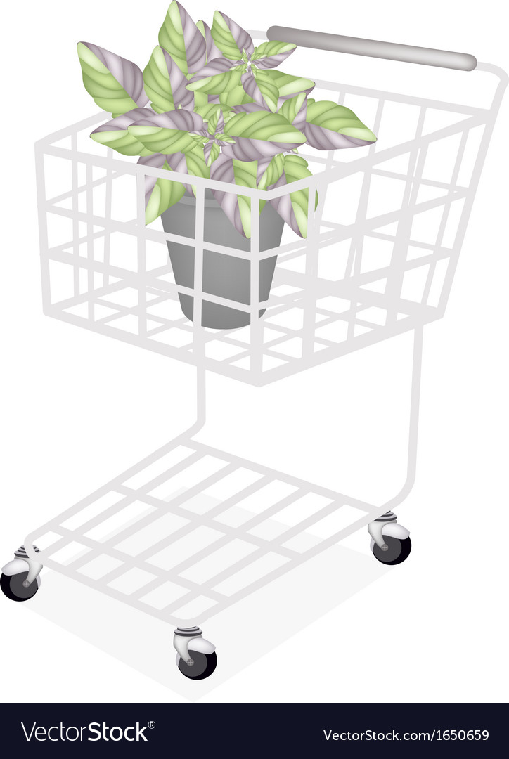 Beautiful acanthaceae plant in a shopping cart vector   Price: 1 Credit (USD $1)