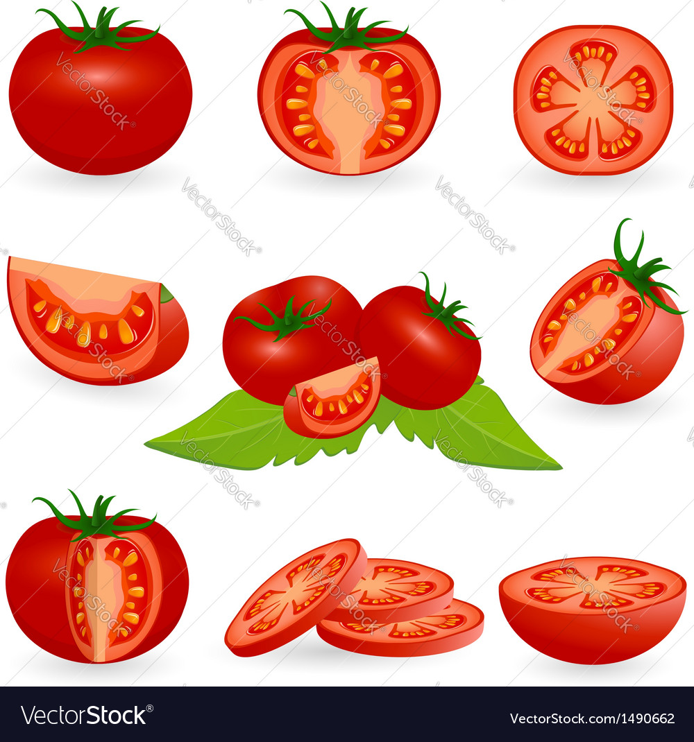 Icon set tomato vector