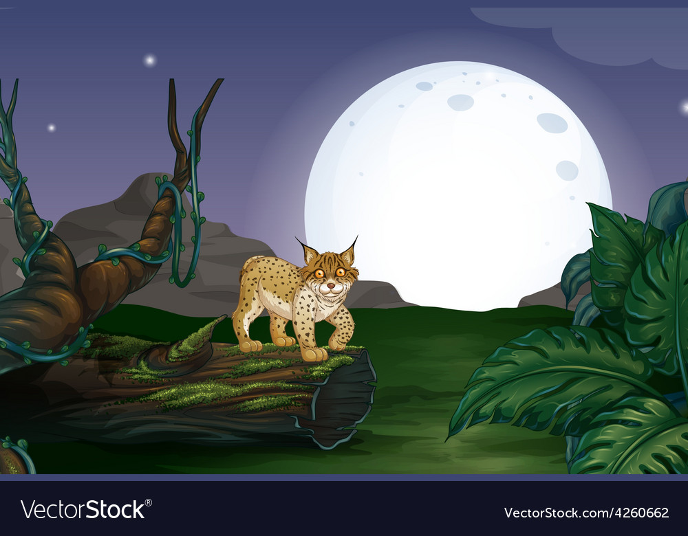 Lynx and forest vector   Price: 1 Credit (USD $1)