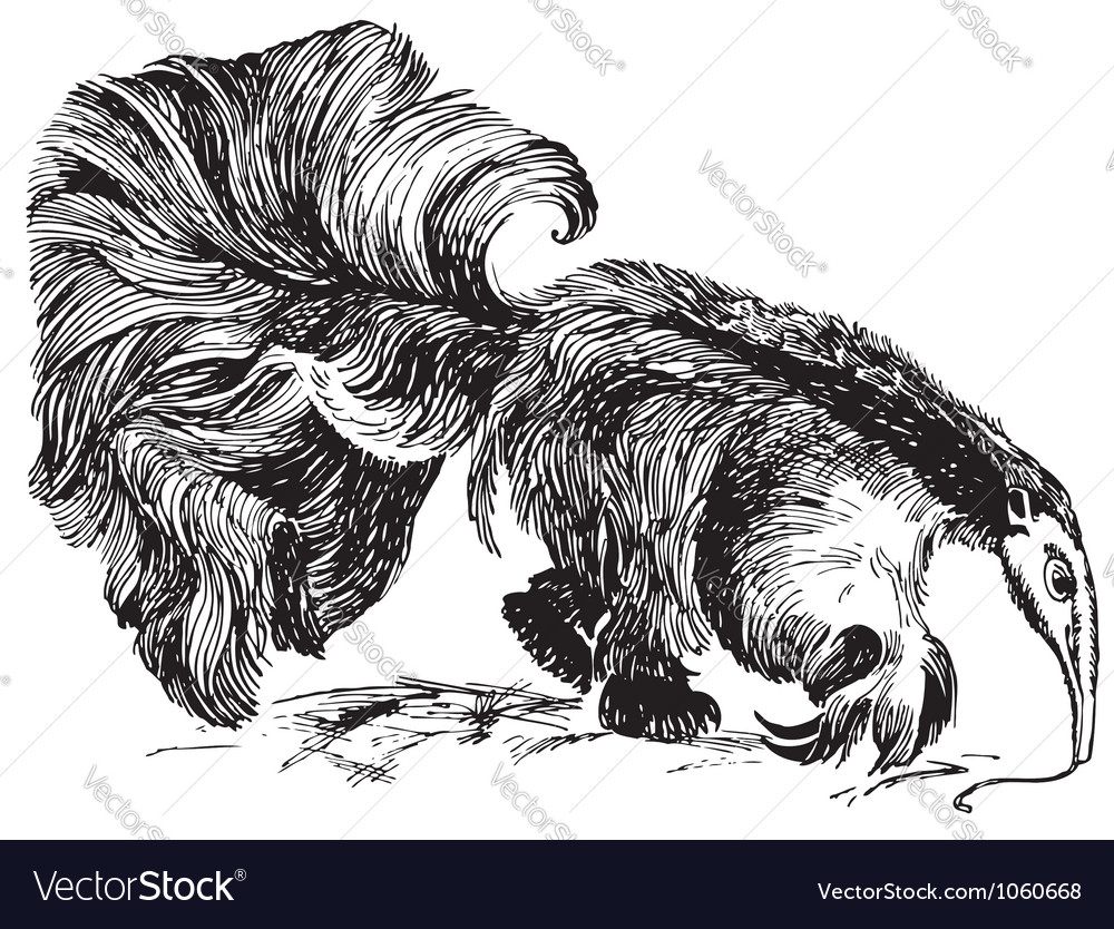 Giant anteater vector | Price: 1 Credit (USD $1)