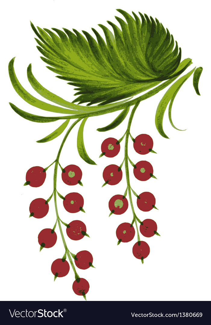 Currant vector | Price: 1 Credit (USD $1)