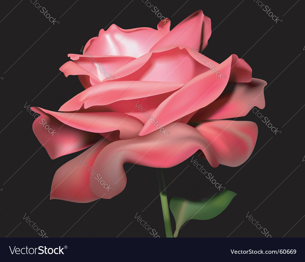 Rose floral vector | Price: 3 Credit (USD $3)