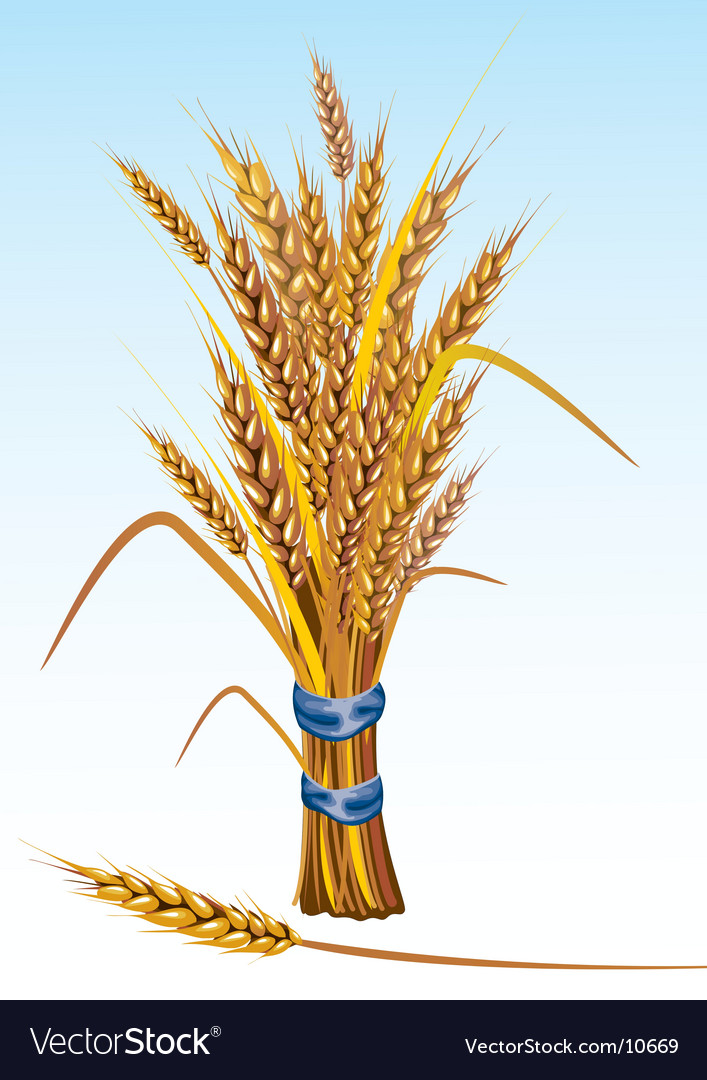 Wheat vector | Price: 3 Credit (USD $3)