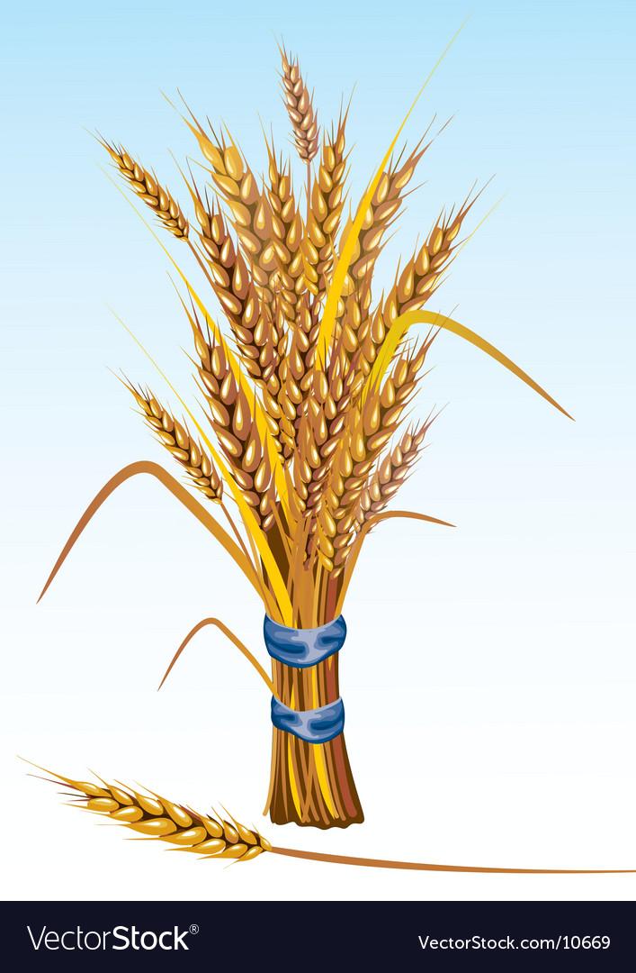 Wheat vector | Price: 3 Credit (USD $3)