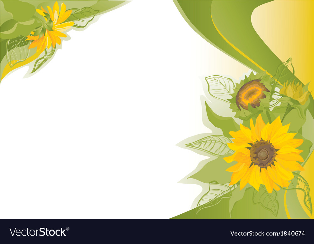 Summer background with sunflowers vector | Price: 1 Credit (USD $1)
