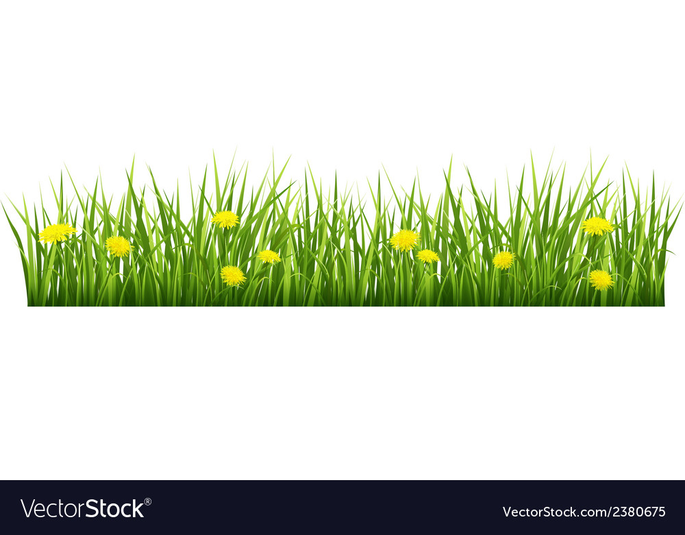 Grass with yellow flowers vector | Price: 1 Credit (USD $1)