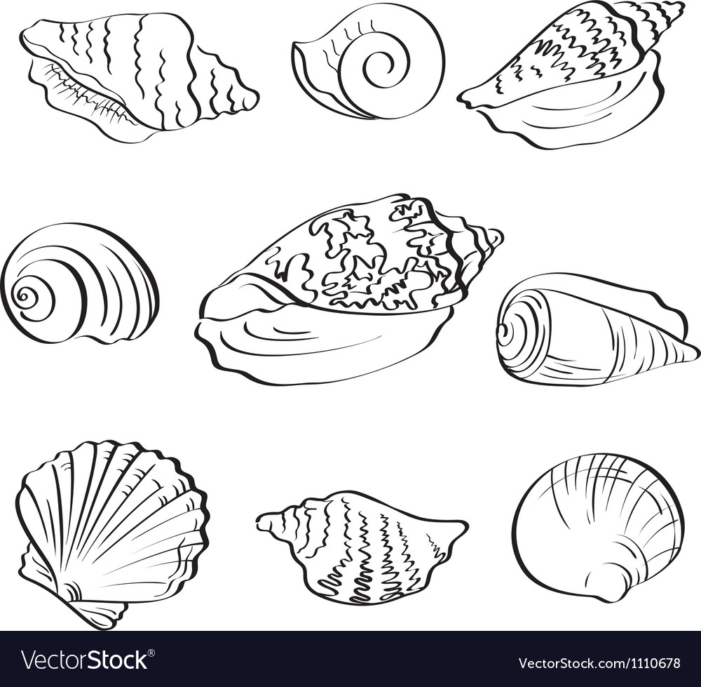 Set seashells outline vector | Price: 1 Credit (USD $1)