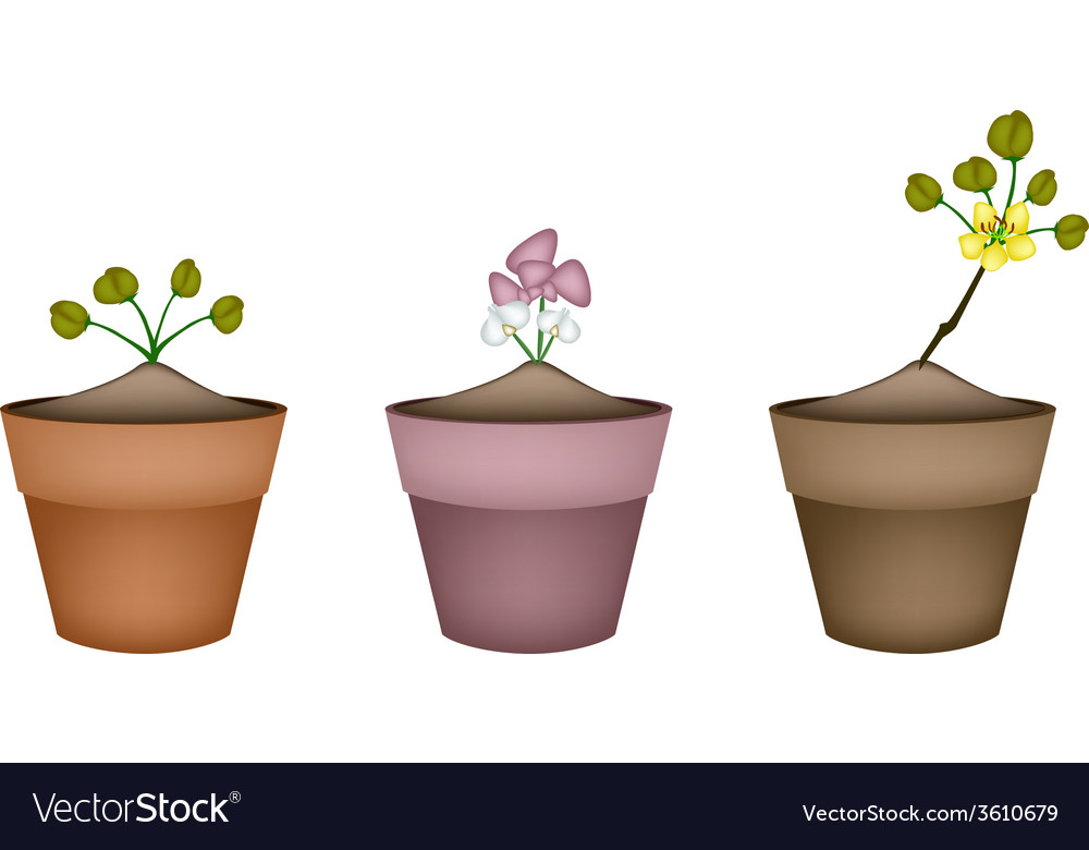 Pink and yellow flowers in ceramic pots vector | Price: 1 Credit (USD $1)