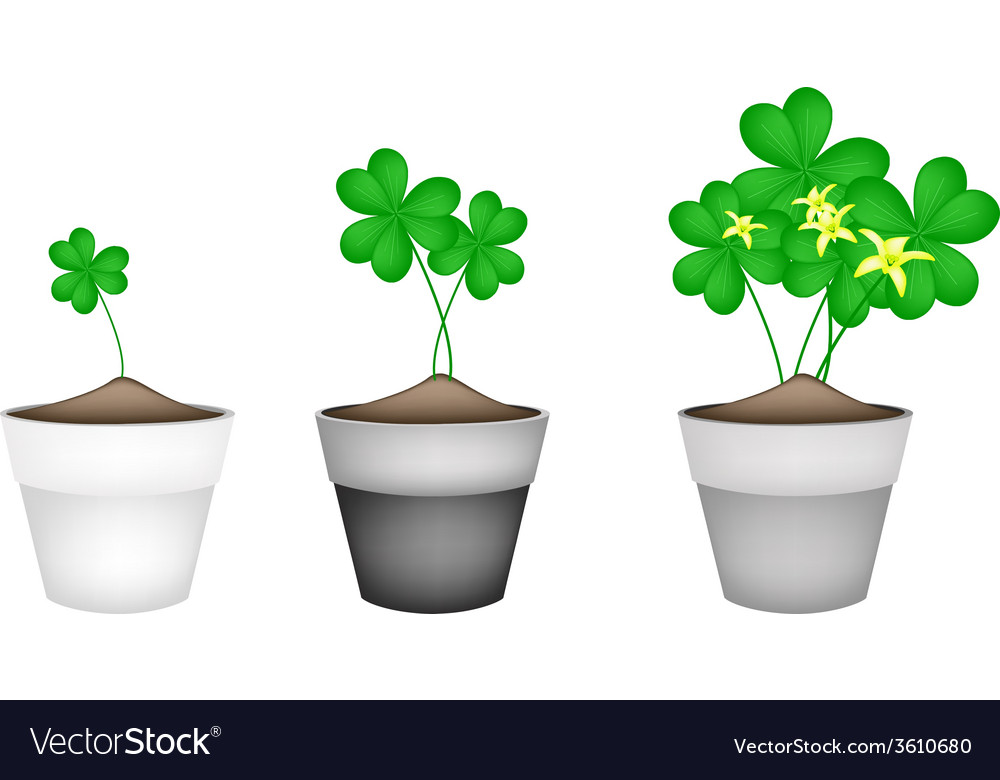 Fresh water clover plant in ceramic flower pots vector | Price: 1 Credit (USD $1)