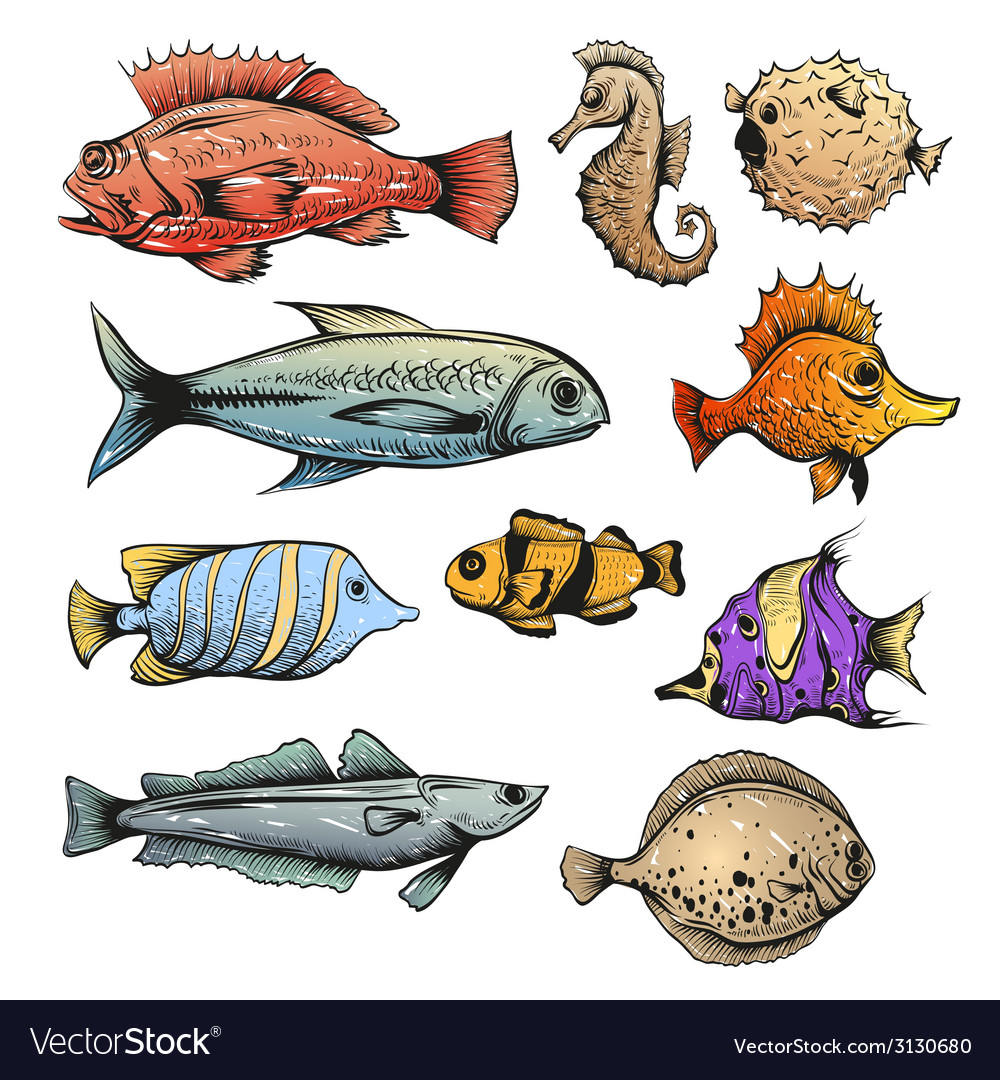 Set of fishes isolated vector | Price: 1 Credit (USD $1)