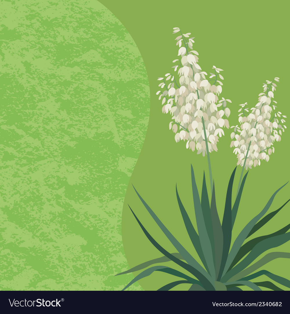 Background with flowers yucca vector | Price: 1 Credit (USD $1)