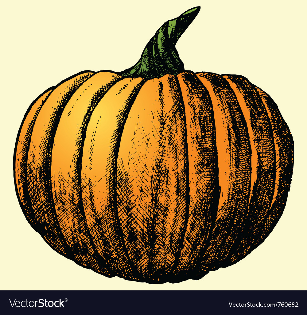 Pumpkin sketch vector | Price: 1 Credit (USD $1)