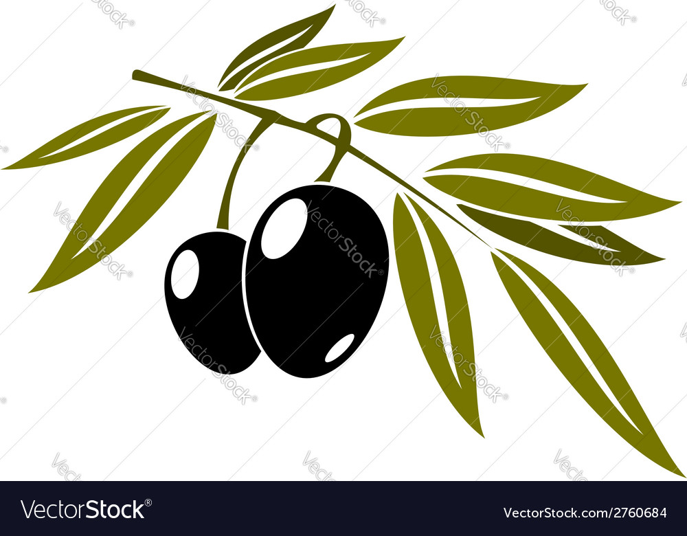 Black olives branch with leaf vector | Price: 1 Credit (USD $1)