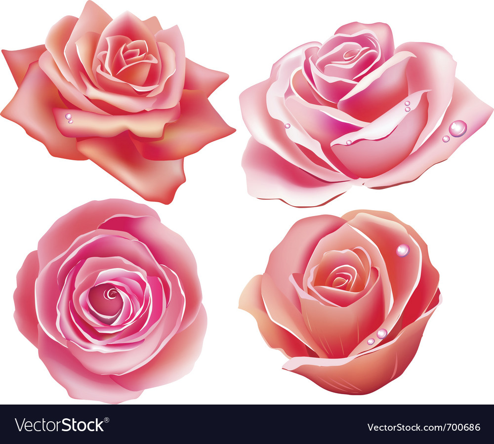 Set of four rose vector | Price: 1 Credit (USD $1)