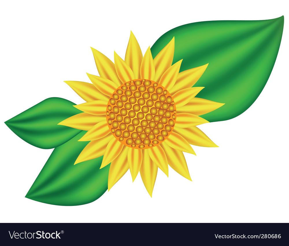 Sunflowers vector | Price: 3 Credit (USD $3)