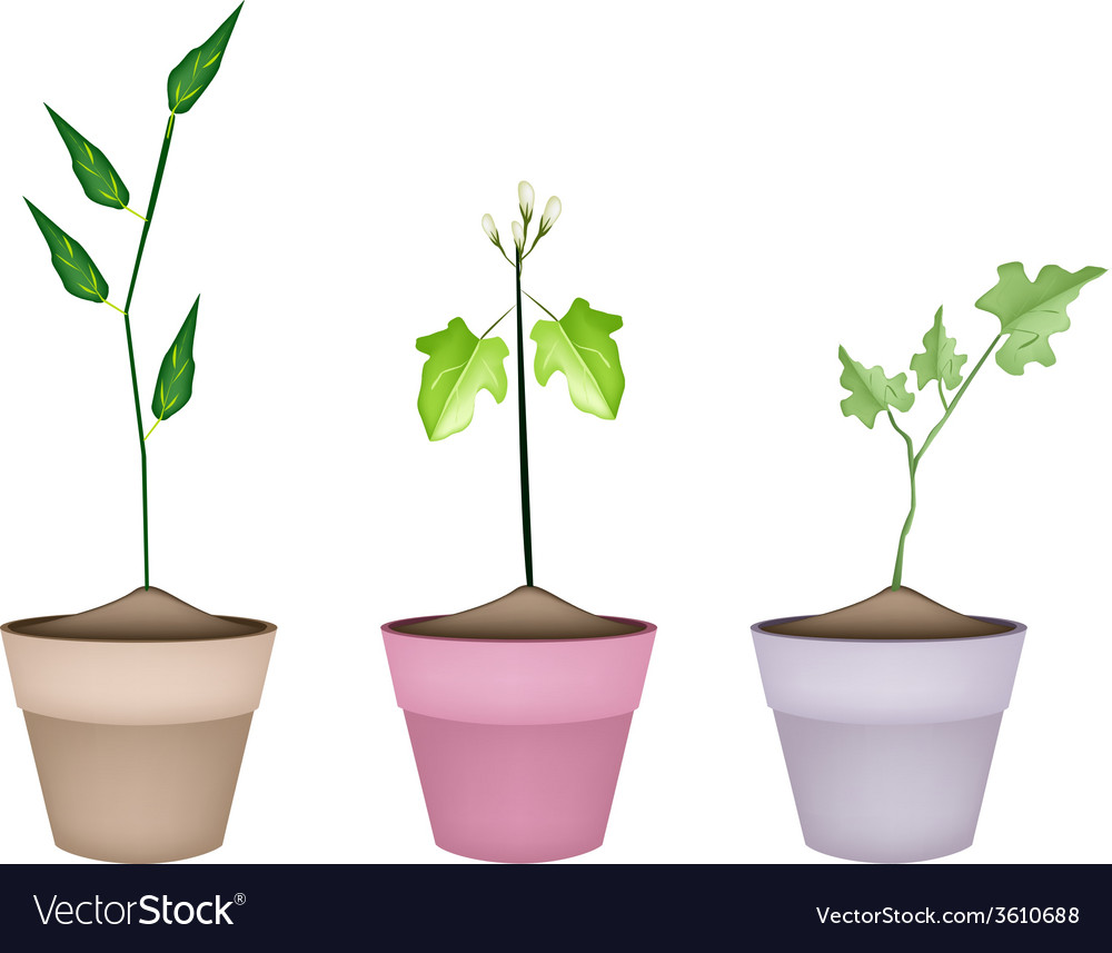 Three green eggplant tree in ceramic pots vector | Price: 1 Credit (USD $1)
