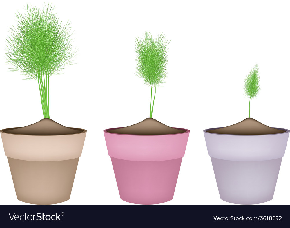 Fresh green dill in ceramic flower pots vector | Price: 1 Credit (USD $1)