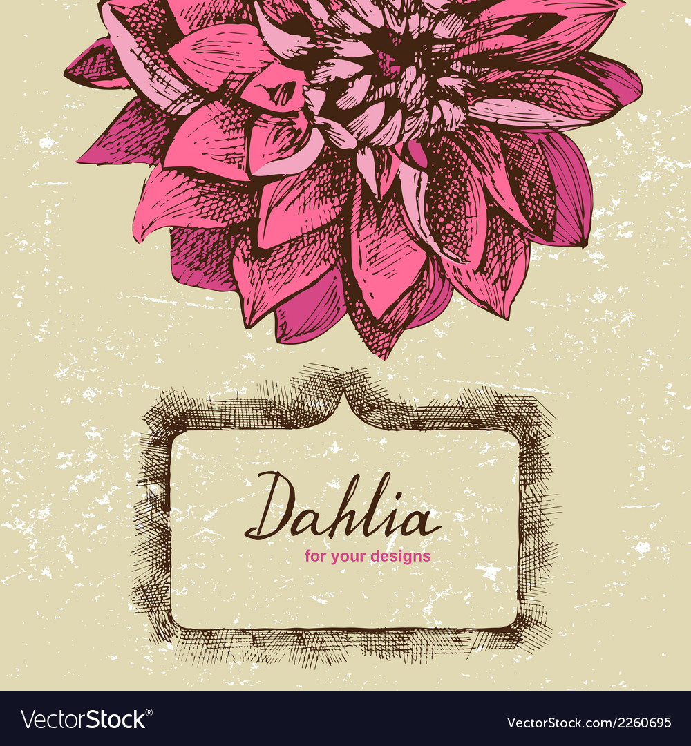 Background with hand drawn dahlia vector | Price: 1 Credit (USD $1)