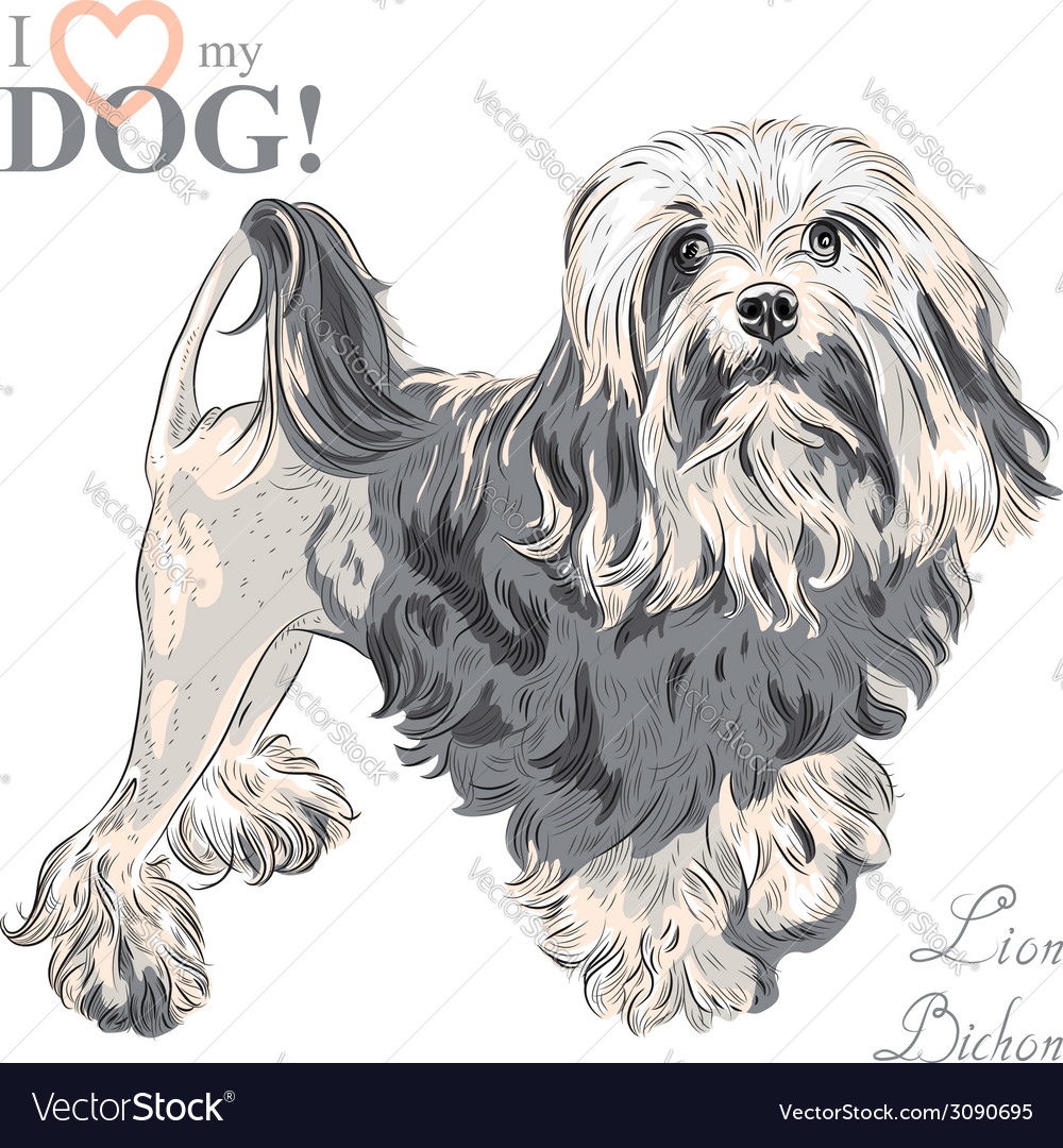 Dog breed lowchen lion bichon vector | Price: 1 Credit (USD $1)