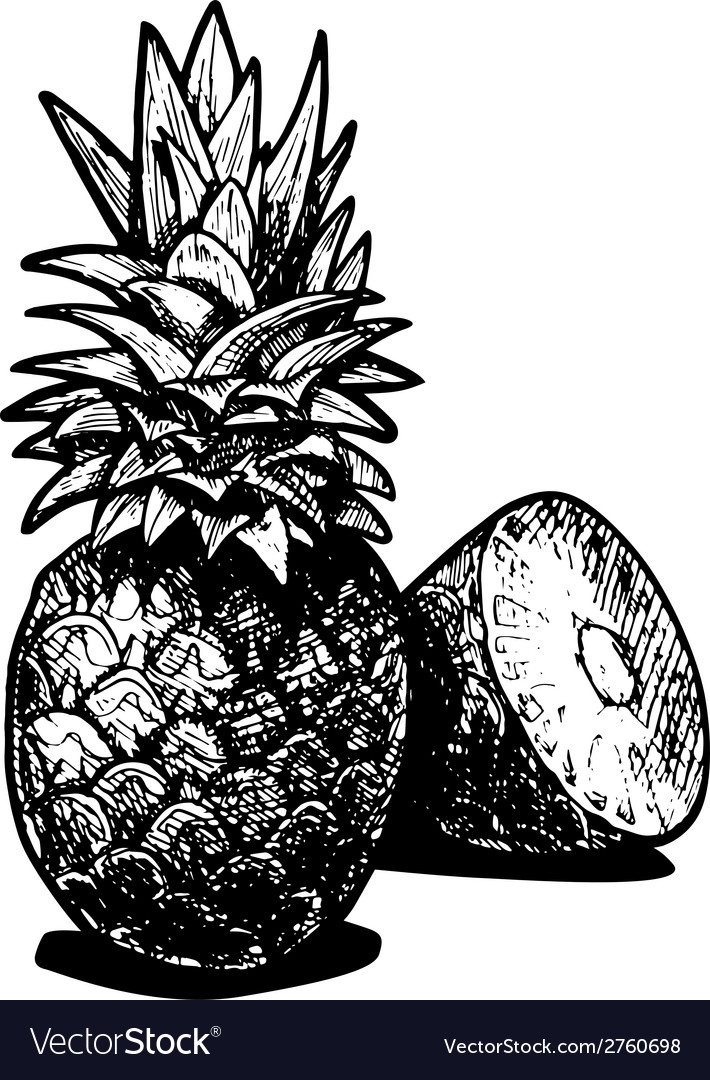 Pineapples vector | Price: 1 Credit (USD $1)