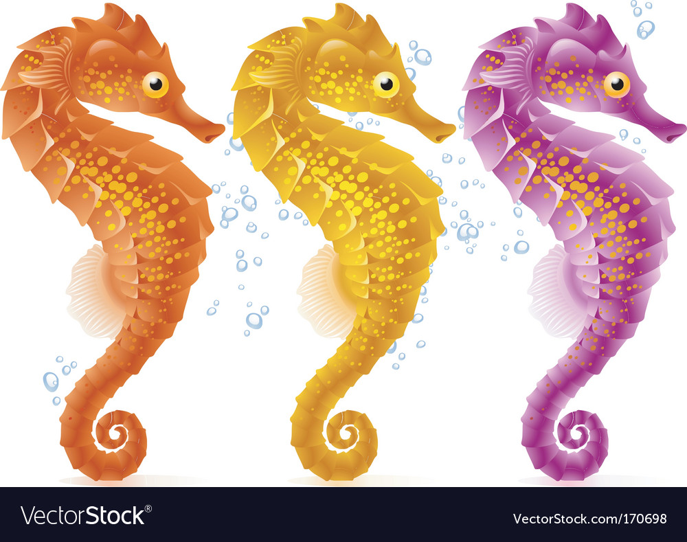 Sea horse vector | Price: 3 Credit (USD $3)