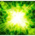 Sun in green leaves vector
