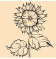 Hand drawn single sunflower vector