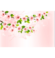Spring background with blossoming sakura branches vector