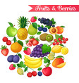 Background with fruits and berries vector