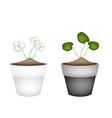 Common frogbit plants in ceramic flower pots vector