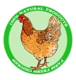 Brown broody chicken vector