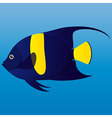 A of a yellow and blue arab angel fish on blue vector